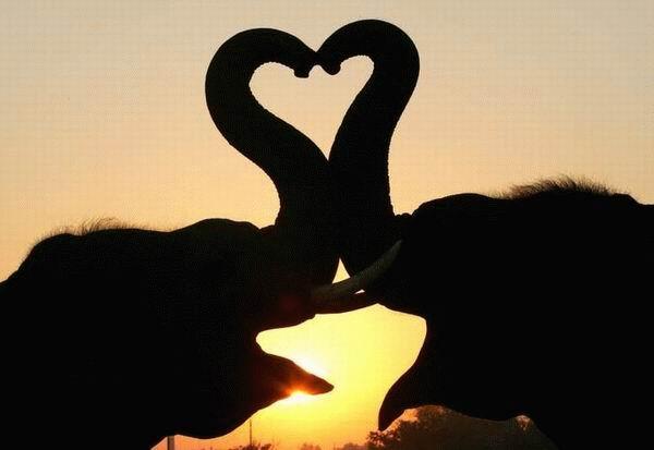 عکس عاشقانه حیوانات جدید