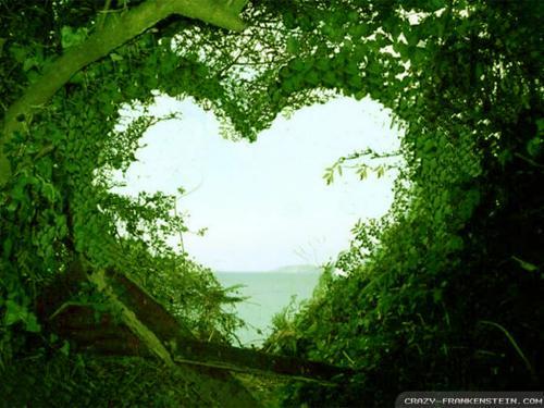 عکس عاشقانه در طبیعت