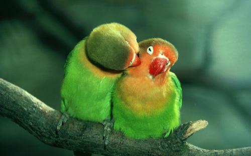 عکس عاشقانه زیبا جدید
