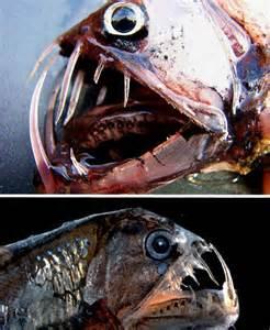 عکس عجیب ترین های دنیا