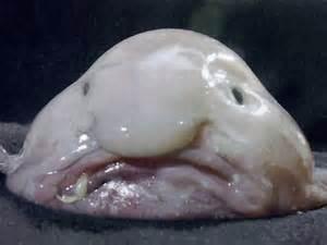 عکس عجیب ترین حیوانات دنیا