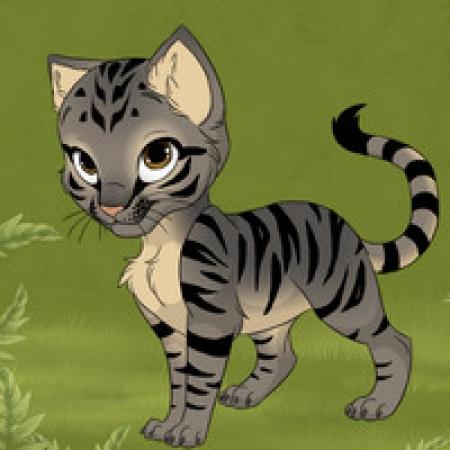 دانلود  بازی زیبای طراحی گربه - بازی آنلاین